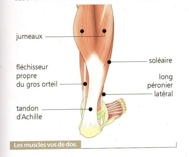 schéma du pied droit